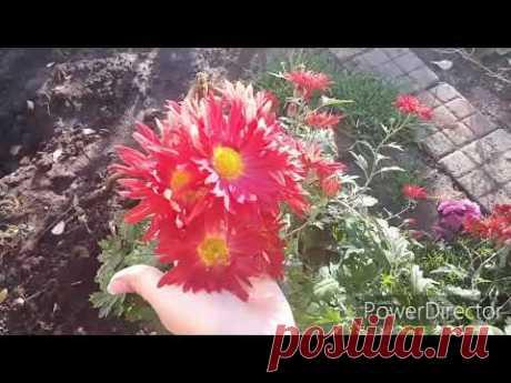 ВЛОГ: Краски осени//Наш сад-огород