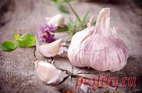 Garlic and water rescued me from a bunch of diseases: course of treatment, responses