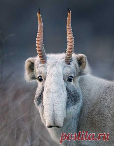 Фото животных, которые вскоре могут исчезнуть