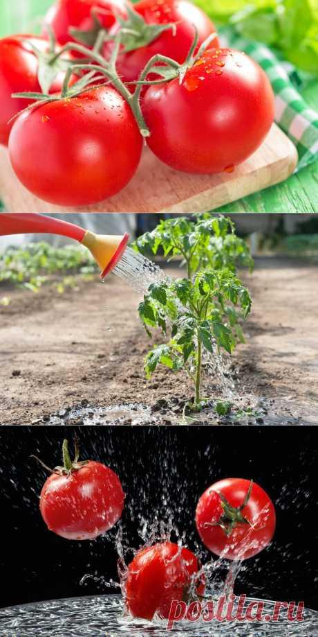7 маленьких секретов выращивания вкусных помидоров | Огород без хлопот