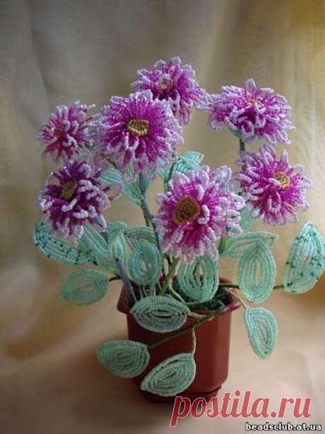 | Записи в рубрике цветы | Дневник ксения_изнова