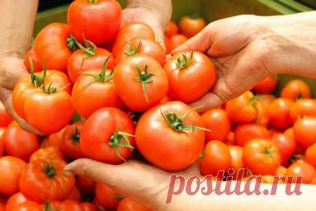 Как вырастить сладкие помидоры | Азбука огородника | Яндекс Дзен