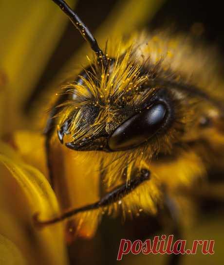 Загадки о насекомых с ответами – 100 лучших загадок – ladyvi.ru