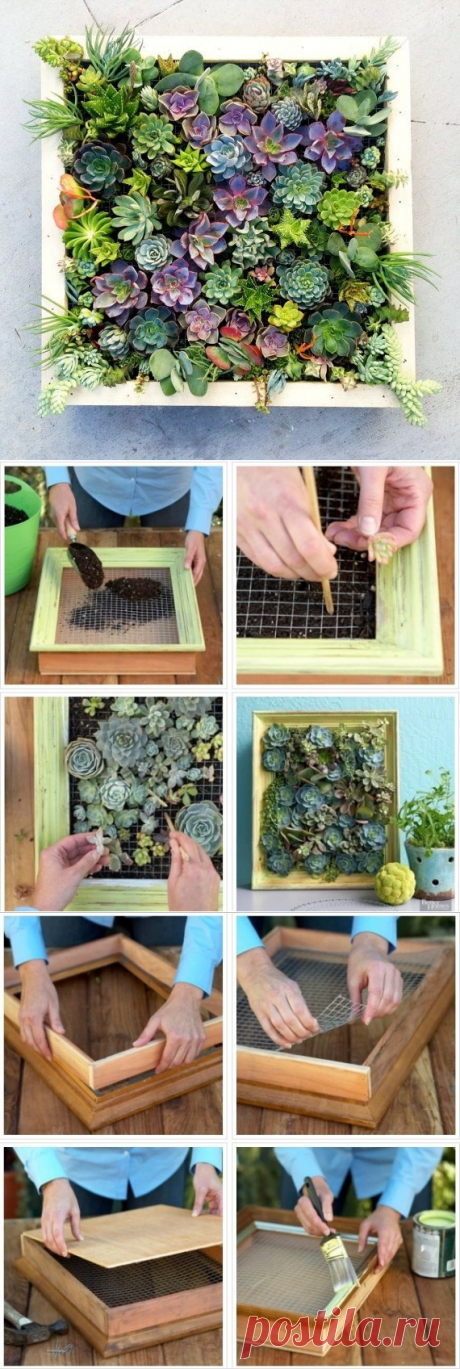 Живая картина из суккулентов: оригинальный мини-сад своими руками — Сделай сам, идеи для творчества - DIY Ideas