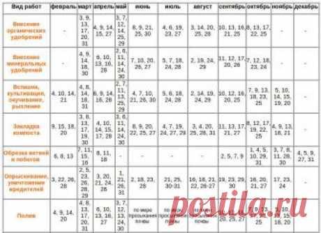 Посевной календарь на 2019 год: таблица благоприятных лунных дней для посадки огородных растений на каждый месяц