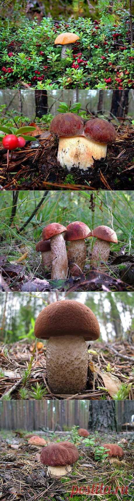 роскошные грибы!!!.