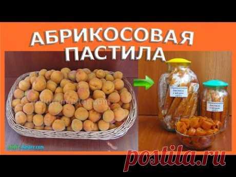 Рецепт пастилы из абрикос в сушилке Ezidri