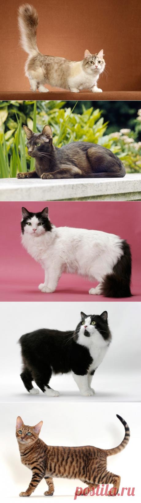 11 необычных пород кошек, которые набирают популярность | PetTips