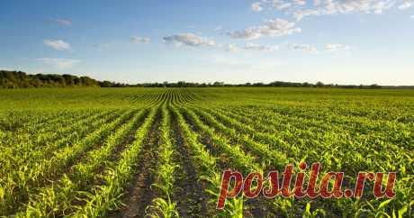 Риски банкротства для сельскохозяйственных кредитных потребительских кооперативов  могут минимизировать В частности, разграничить размеры административных штрафов в зависимости от объемов их деятельности.