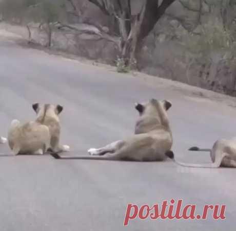 Самые ржачные приколы про животные. Приколы про животных самые смешные картинки. Приколы про живот