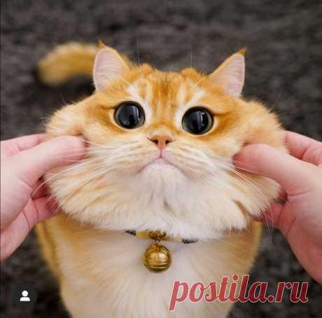 Милейшие коты добавят теплоты☺️ | Фотограф с котом 📷🐈 | Яндекс Дзен