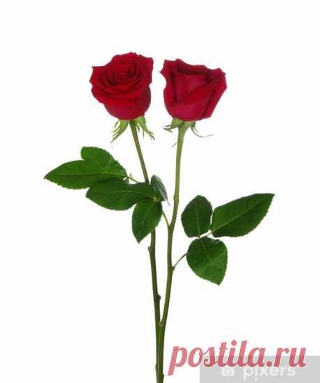 rosas rojas con imperfecciones - Búsqueda de Google