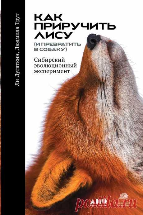 Где то далеко в Сибири живут мохнатые четвероногие создания, вислоухие и приветливо виляющие хвостами. Они не менее дружелюбны и послушны человеку, чем любая комнатная собачка. Но это не собаки, а лисы. Они появились в результате самого удивительного в истории эксперимента по селекции, словно спрессовавшего время, когда эволюционный путь, занявший в природе тысячи веков, был пройден за какие-нибудь шестьдесят лет.