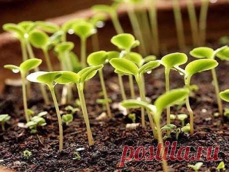 ПОДСКАЗЫВАЕТ САМА ПРИРОДА - КОГДА ЧТО СЕЯТЬ? Погода очень непредсказуема, поэтому сроки посева культурных растений лучше всего сверять по самой природе.Начало весны огородника – день, когда зацветает мать-и-мачеха. От этого дня в старину и отсчи…