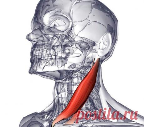 Массаж ГКС - мышцы для сохранения молодого лица | Роза Красная | Яндекс Дзен