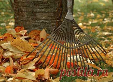 Листовая плесень –  бесплатный чудо-кондиционер для почвы! Когда осенью листья начинают опадать, вы сталкиваетесь с вопросом, что делать со всеми этими коричневыми «дарами природы», разносимыми ветром. Многие просто сгребают и укладывают их в мешки, чтобы выбросить на свалку. Но почему бы не превратить их в превосходное и, что немаловажно, бесплатное средство для здоровья почвы?