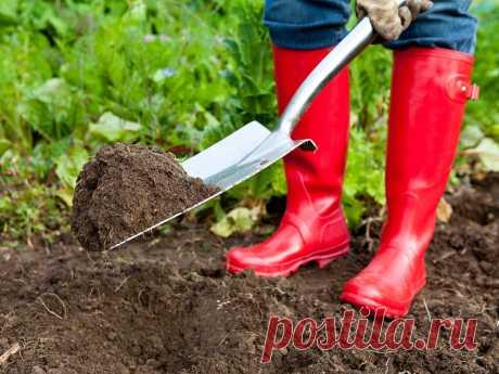 Как я восстанавливаю плодородие почвы после дачного сезона - земля обновляется и на ней будет все приживаться | Добрый дачник | Яндекс Дзен