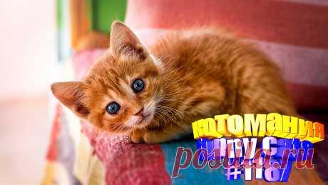 Любите смотреть смешные видео про котов? Тогда мы уверены, Вам понравится наше видео 😍. Также на котомании Вас ждут: видео кот,видео кота,видео коте,видео котов,видео кошек,видео кошка,видео кошки,видео о котах, видео о кошках смешные, видео смешные котиков, для котов видео, коты видео приколы, кошка, приколы котами, приколы о кошек, про котика, про смешно кошек, смешно кошки, смешное про кошек, смешные кошки