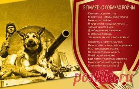 Военные собаки и их подвиги