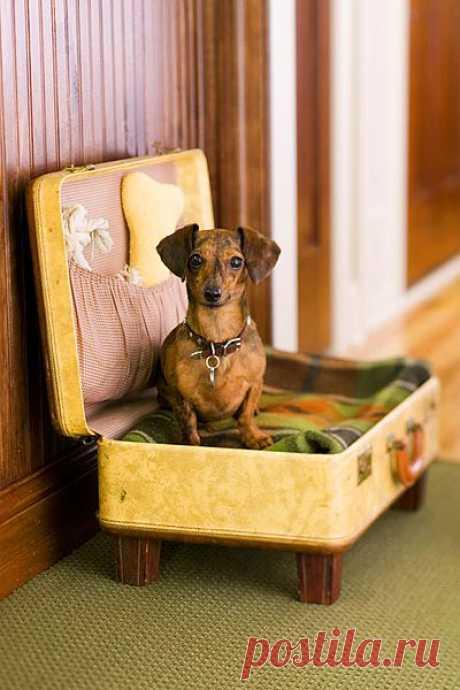 caring-for-pets13.jpg (изображение «JPEG», 400×600 пикселов)