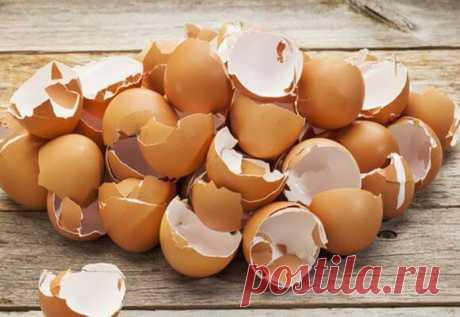 Веские поводы не отправлять яичную скорлупу в мусорку