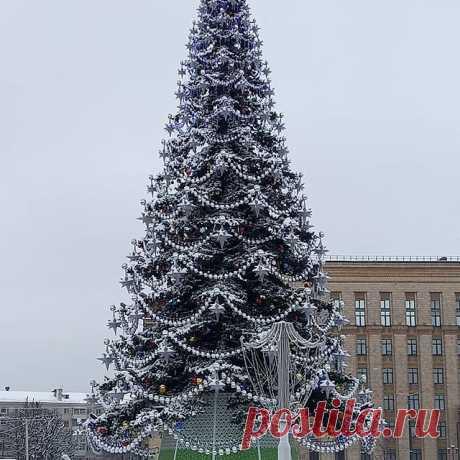 Photo by voronezh_top1 in Voronezh. На изображении может находиться: новогодняя елка, небо, дерево и на улице.