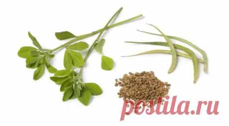 Съедобная шамбала: чудо-семена пажитника, о которых мы забыли - Вкусно с Любовью - медиаплатформа МирТесен