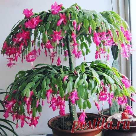 На изображении может находиться: растение
