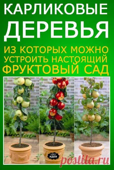 Карликовые деревья, из которых можно устроить настоящий фруктовый сад прямо на балконе | Тысяча и одна идея