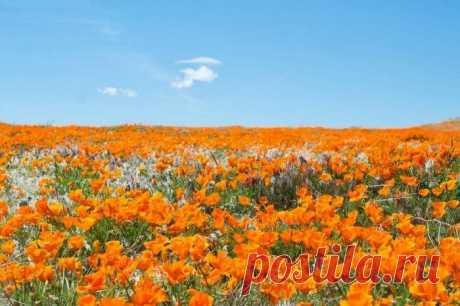 Долина Антелоп – заповедник калифорнийских маков.