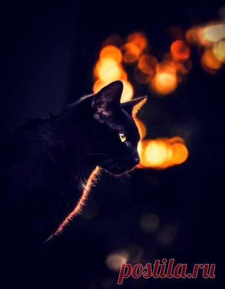 Кофейный аромат с щепоткой шоколада... Огонь свечи... На стенах мирно дремлют тени... Мой кот – иссиня-чёрный, с золотистым взглядом – В осенний вечер согревает мне колени.  Темно вокруг... Свечой очерчен остров света... Смотрю на пламя... Пальцы тонут в мягкой шерсти... Ночь утекает в щели звёзд и кот с рассветом Уйдёт. Но лишь стемнеет – он уже на месте.  И вновь в окно вольётся ночь черничным морсом... Уходит кот с коленей, видно, стало тесно. Грядущее его не беспокоит ...