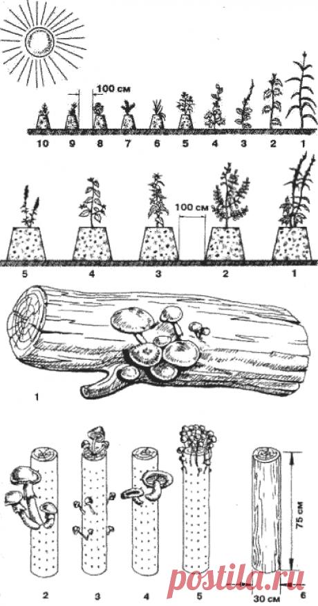 Вертикальный огород. Сад своими руками. Вертикальные грядки. Конструкция вертикального интенсивного сада, огорода, виноградника, ягодника.