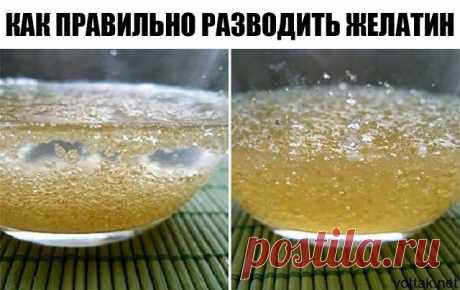 Как правильно разводить желатин Развести желатин не сложно - растворить его в холодной воде, далее долить жидкость до нужного объёма и подогреть.  ОЧЕНЬ ВАЖНО ПОМНИТЬ: 1. Важно соблюдать пропорции - иначе может получиться резиновое изделие: 20 грамм желатина + 1 литр воды = дрожащее желе 40-60 грамм желатина + 1 литр воды = желе, которое режется ножом 2. Нельзя желатин кипятить, в этом случае он теряет все свои свойства и не придаст блюду нужную консистенцию. 3. Нельзя ост...