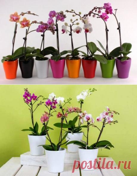 Tenéis una orquídea. ¿Queréis que de ellos sea 100?