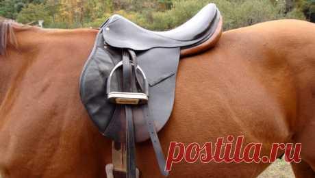 Амуниция для лошади: виды и названия с фото, как выбрать и сделать своими руками