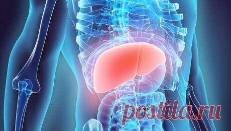 Как разобраться в гепатитах