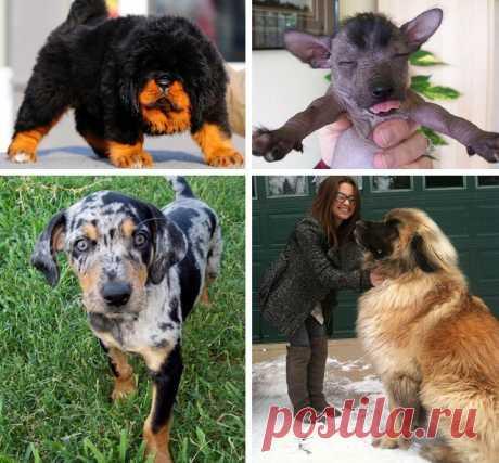 Самые классные, необычные и, к сожалению, редкие породы собак