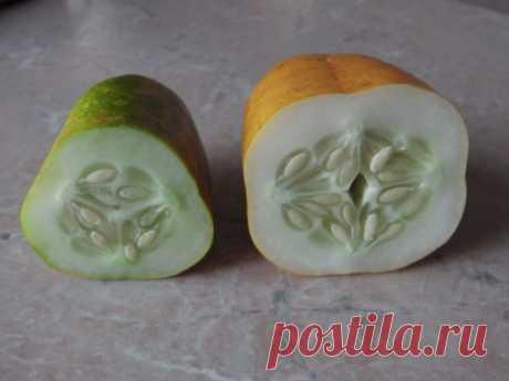 Отбираю семена огурцов только из плодов женского типа — не трехгранных, а округлых и четырехгранных | Собираем урожай | Яндекс Дзен
