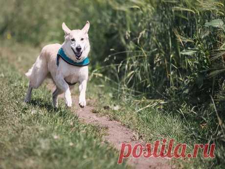 Как научиться гулять с собакой без поводка? | nashi-pitomcy.ru