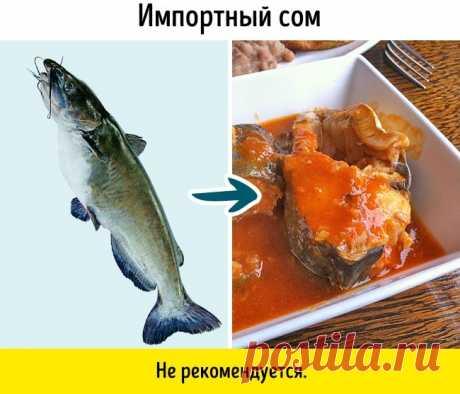 9 видов рыбы, которые не стоит есть | Darada