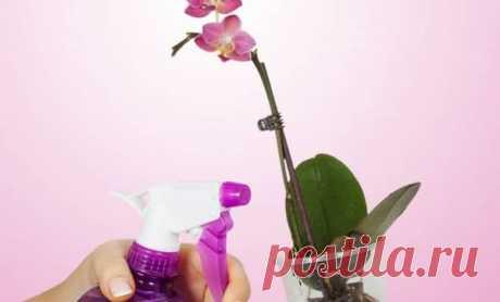 Como hacer en las condiciones de casa el coctel de vitaminas para las orquídeas