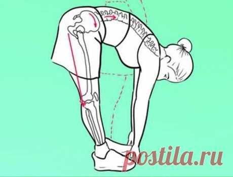 Хочешь жить дольше? Чаще наклоняйся! В даосской традиции поясничную мышцу называют троном, или мышцей души, поскольку она окружает нижний даньтянь — главный энергетический центр тела. Гибкая и сильная поясничная мышца заземляет нас и дает возможность тонким энергиям протекать через кости, мышцы и суставы.