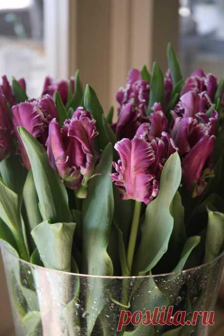 А кто - то свыше... безупречный,     Цветы придумал и Весну...  Чтоб этот Мир под солнцем ясным,     Был чуть подобен - Божеству...