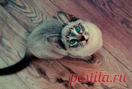 Кошка как индикатор кармы - медиаплатформа МирТесен Большая часть нормальных людей относится к кошкам исключительно позитивно, но некоторые представители рода людского испытывают к ним ничем необъяснимую неприязнь. Кошки их раздражают, нервируют, мешают им, и вызывают желание немедленно прогнать. На первый взгляд кажется, что тут такого? Ну не...