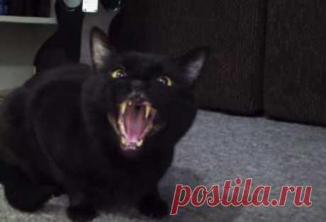 Почему кошки ложатся на больное место?