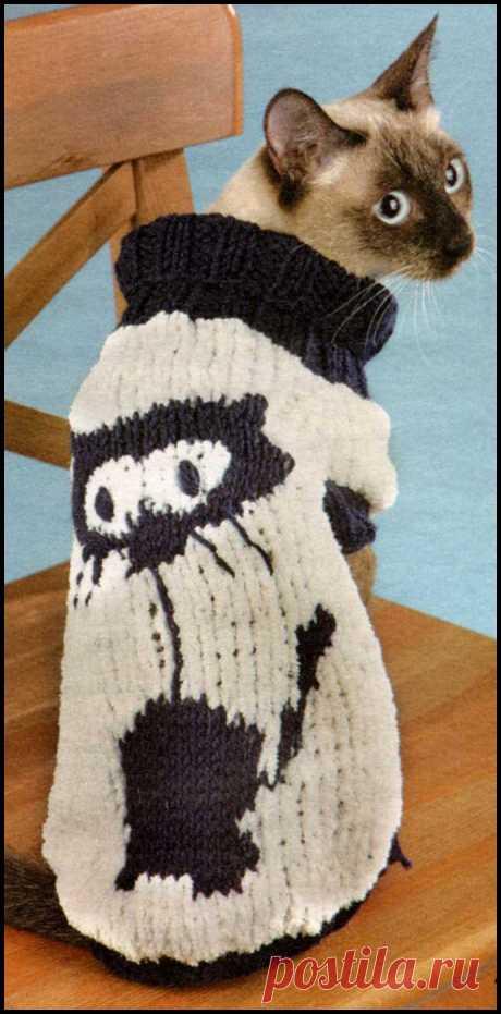 Белый свитер для котика Белый свитер для котика. Красивый белый свитер для котика. Эту модель вы легко сможете связать из остатков ниток. Модель заботливо согреет вашего котика.
