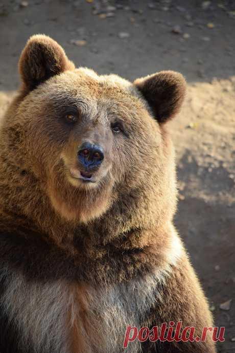 Загадки о медведе с ответами – 50 самых лучших загадок – ladyvi.ru