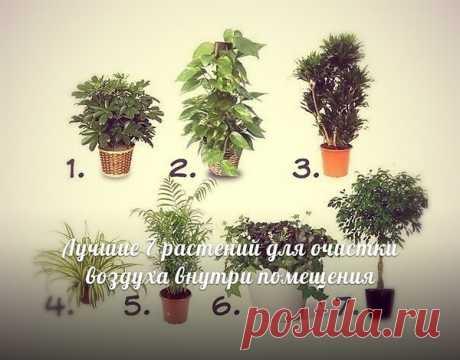 Пыль ур.72 Галина