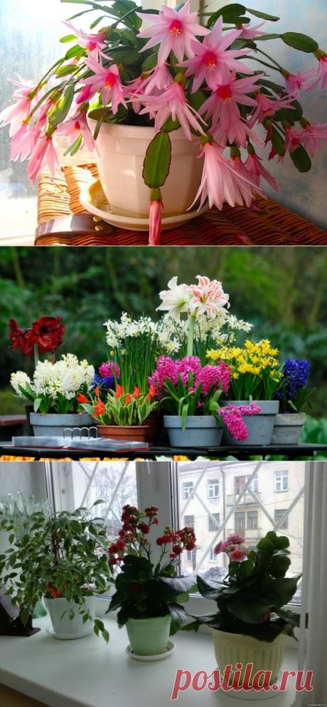 Секрет пышного цветения комнатных растений! » Женский Мир