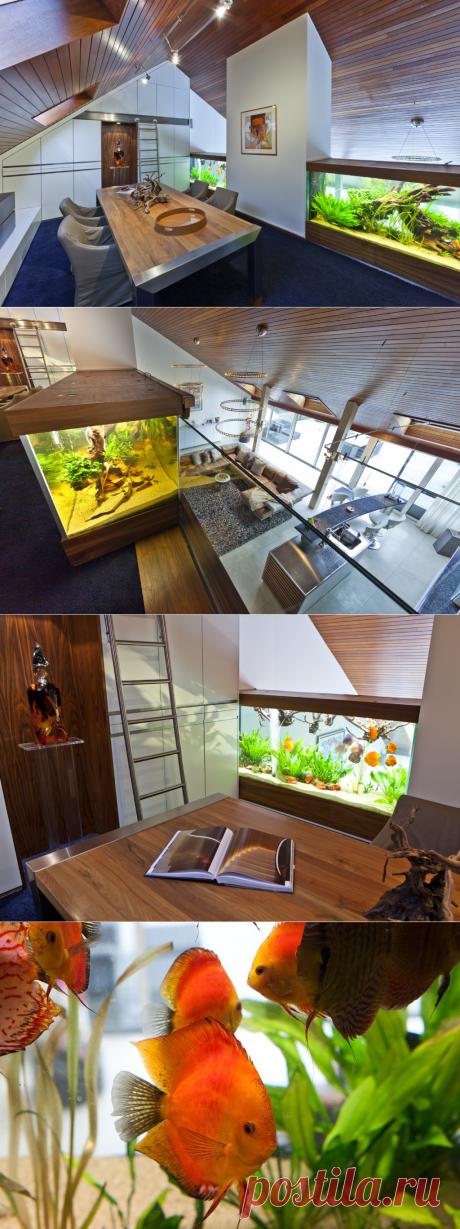 ¡La casa con el acuario! Simplemente la casa con el acuario.